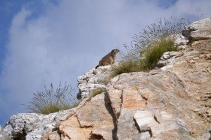 Marmottes ! dans Montagne dsc_3549-300x200