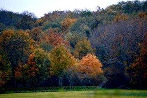 Couleur d'Automne - Villeparisis (Seine-et-Marne) dans Ile de France dsc_6139-300x200